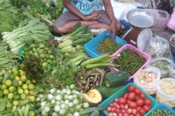 green-grocer-local-style-1